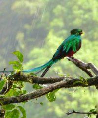 Tour de observación de aves en Boquete