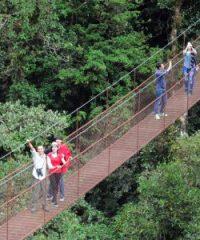 Puentes Colgantes en Boquete